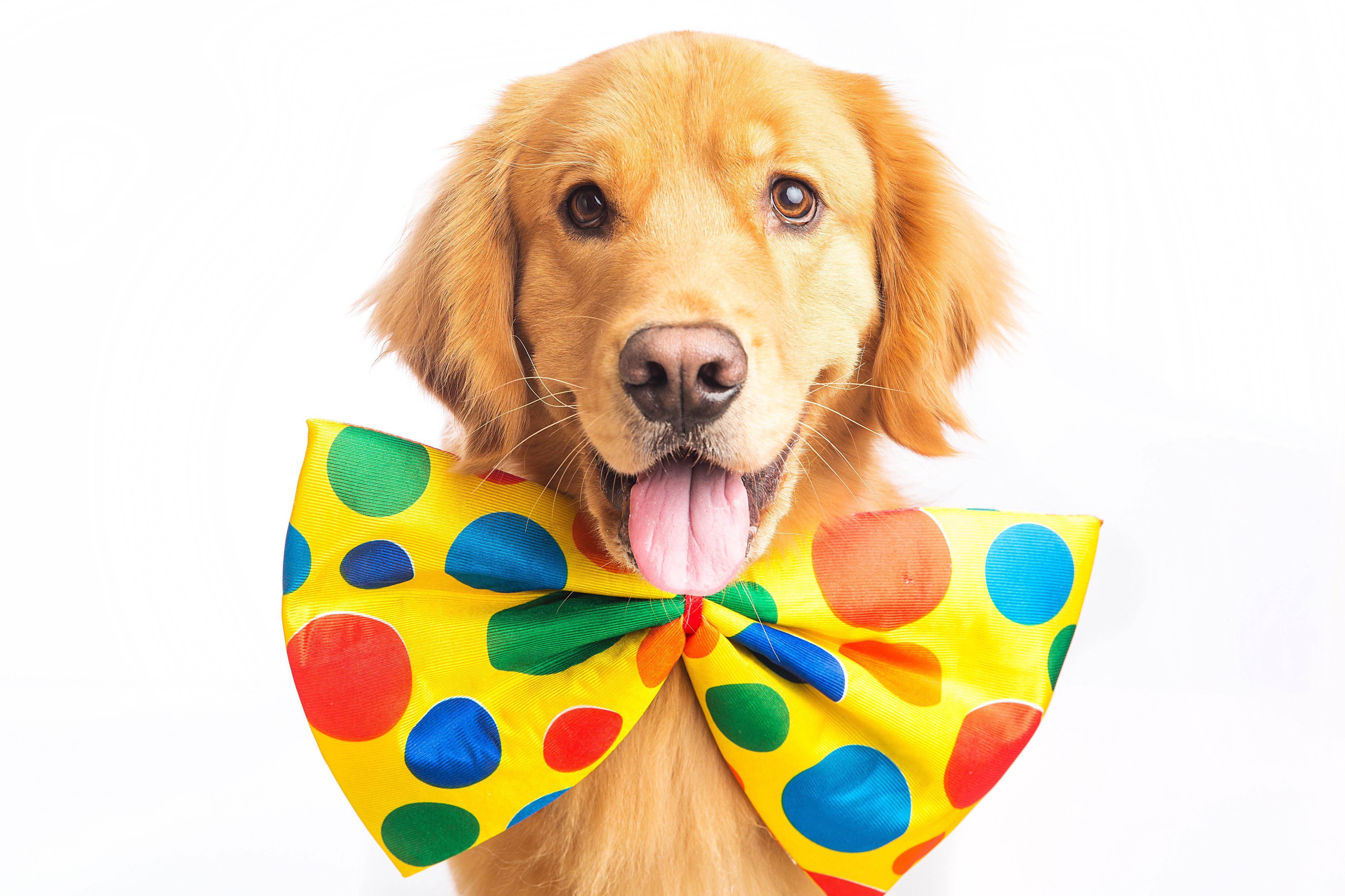 Marietta Doggy Daycare - Marietta, GA - Business Page - photo#42