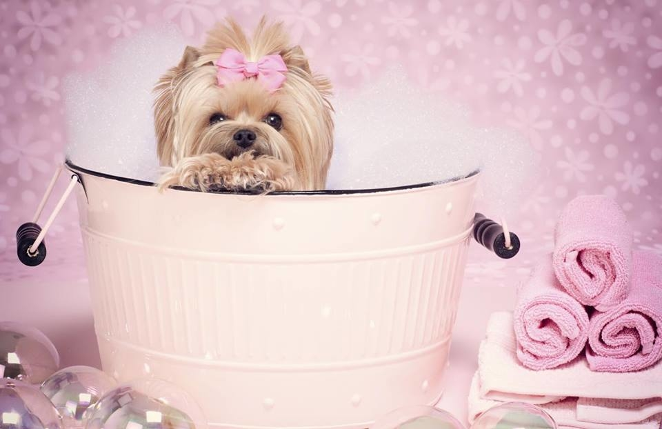 Le Paw Spa Mobile Pet Grooming image 3