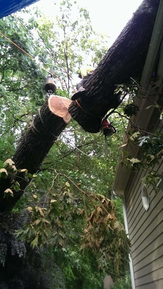 Beaver Tree Service Inc image 4