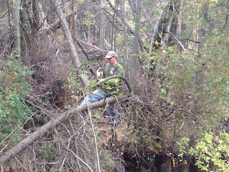 Toms River Tree Service image 9