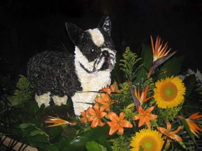 Aux Pensées Fleuries à Saint-Eustache