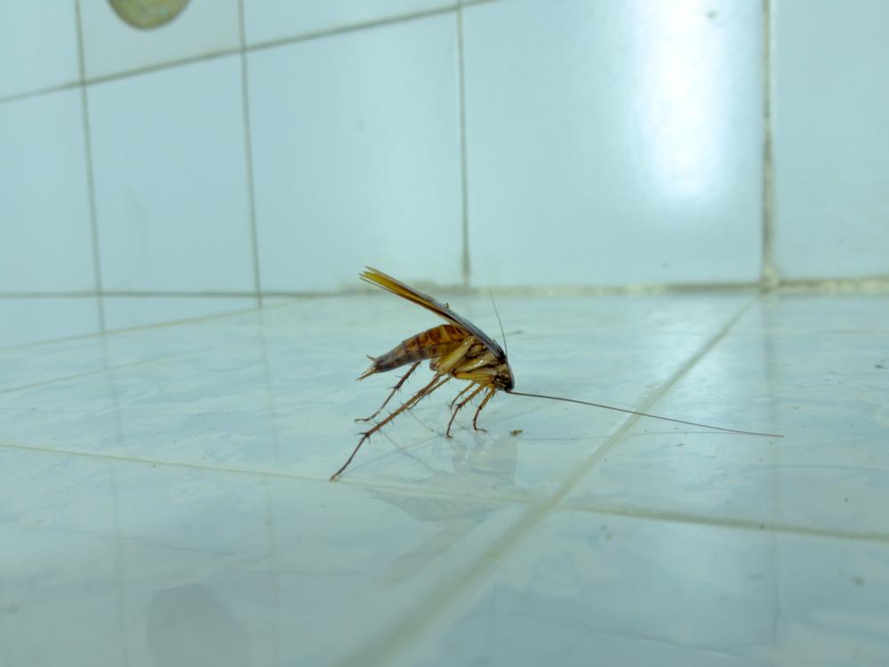 Leverett's Pest Control image 11