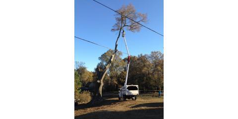 Childers Tree Service image 2
