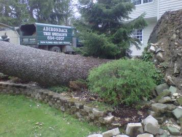 Adirondack Tree Specialists Inc image 2