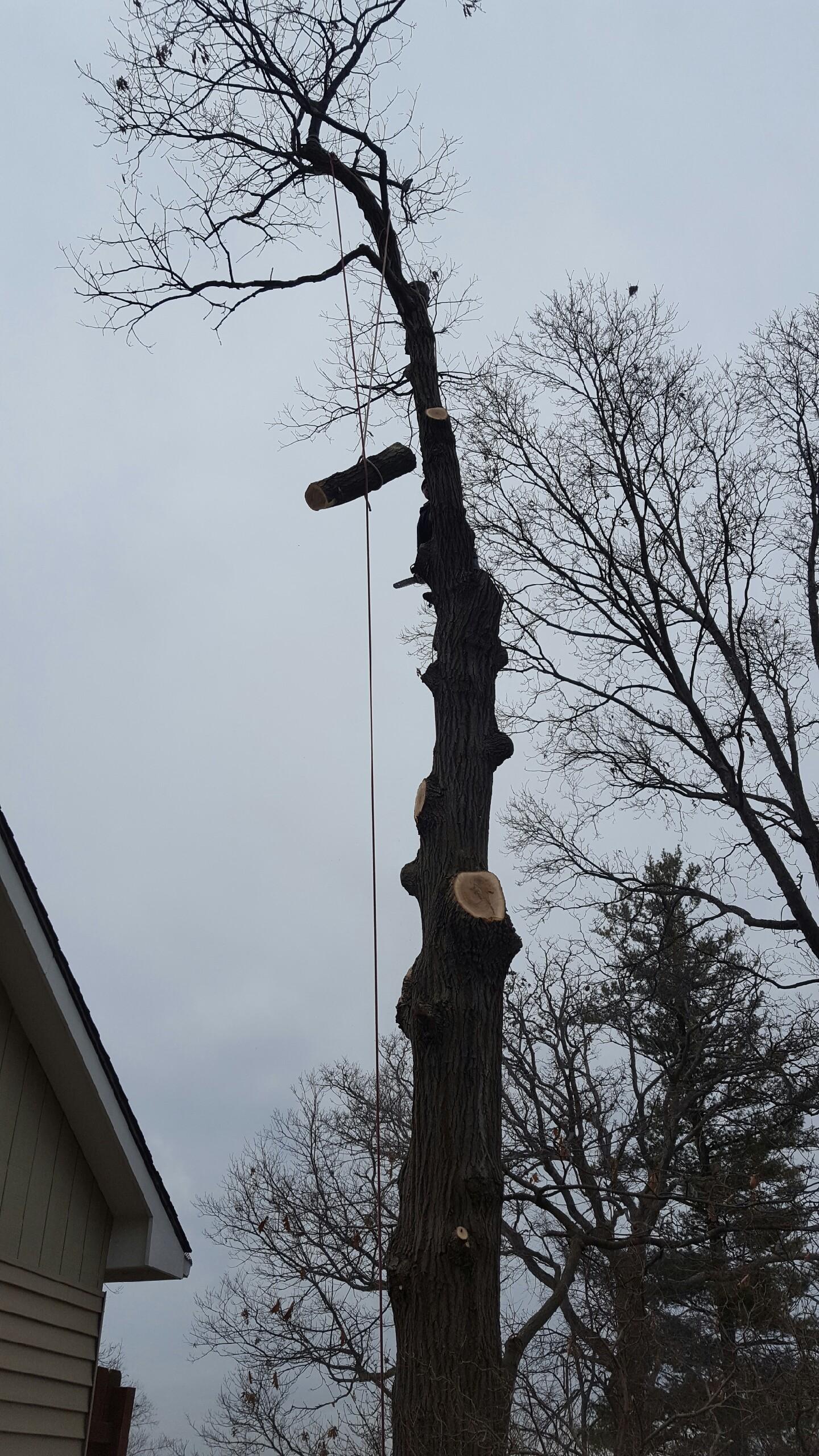 Coffman's Tree Service image 4