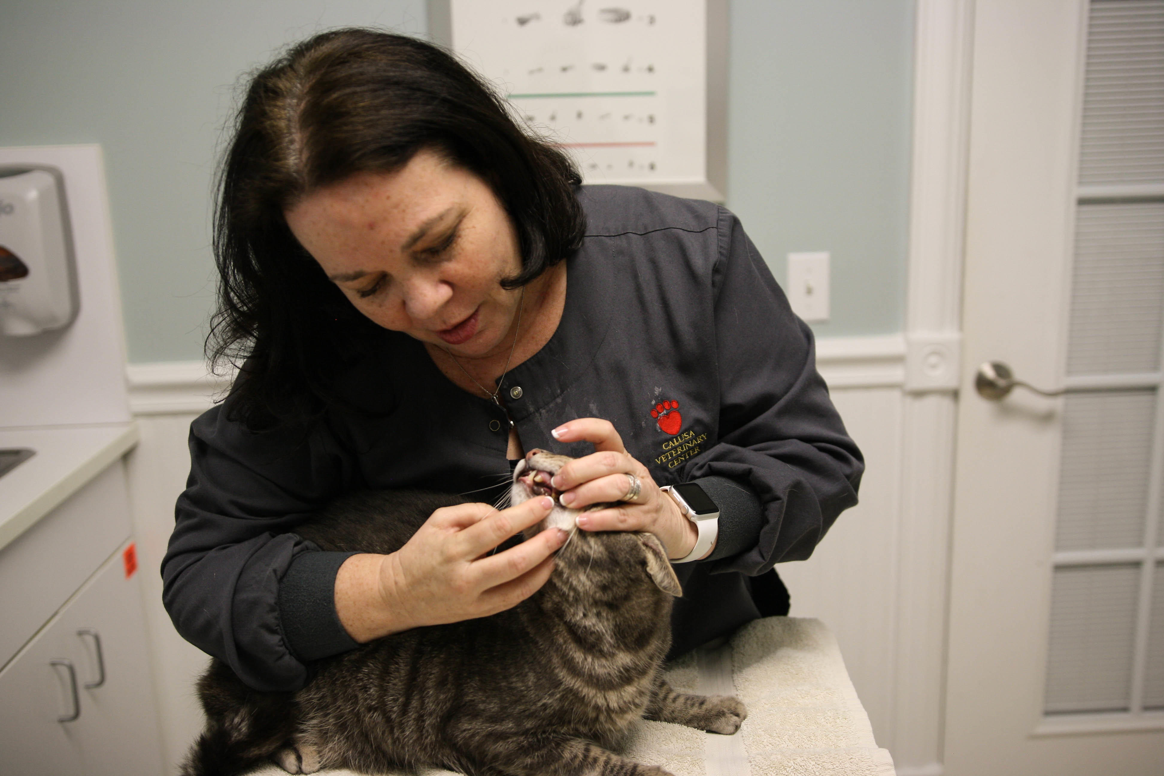 Calusa Veterinary Center in Boca Raton, FL, photo #29