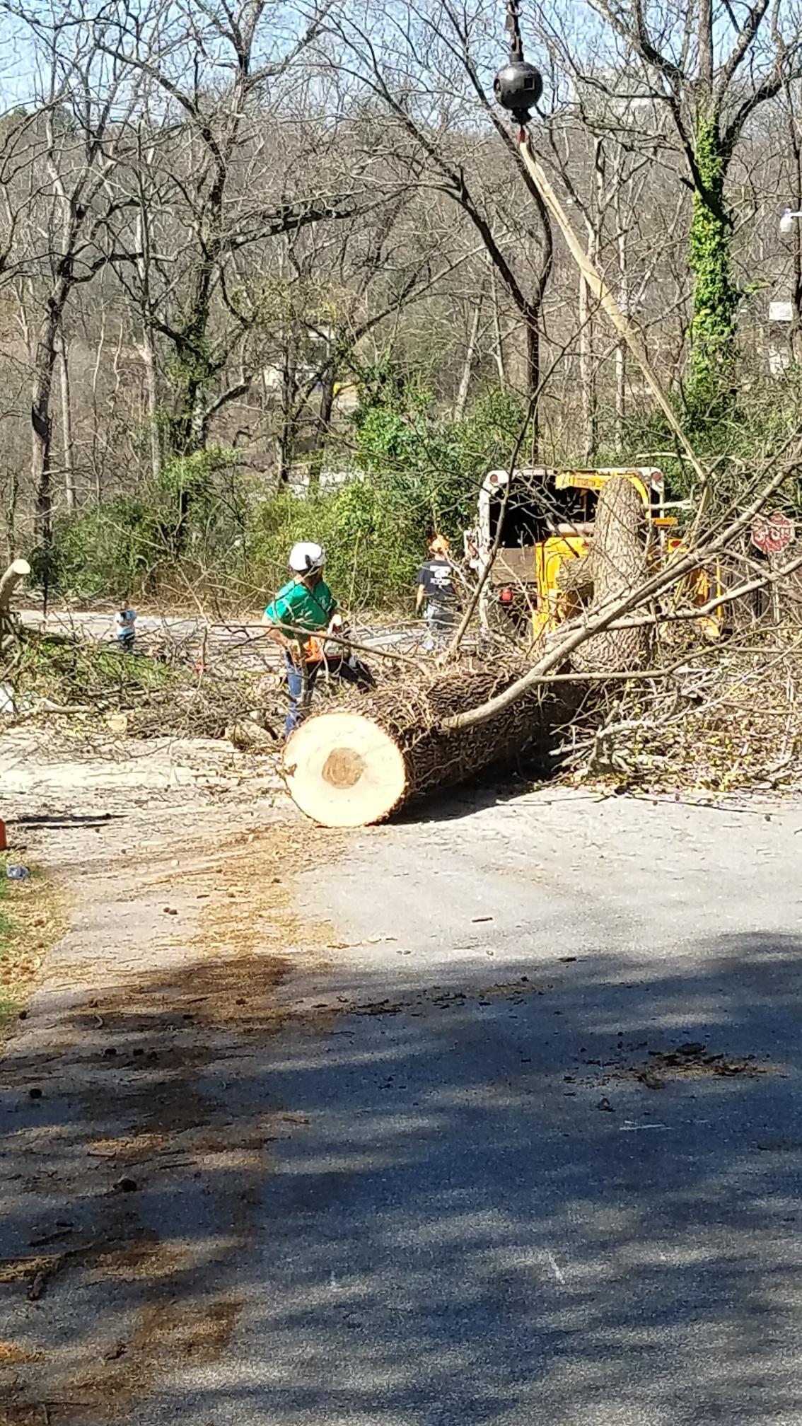 RTS Arborists, LLC (aka Robertson's Tree Service) image 0