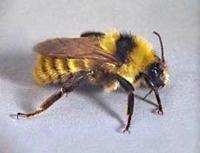 D & T Pest and Termite Control, Inc. image 5
