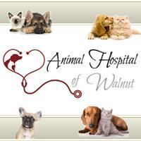 Animal Hospital Of Walnut