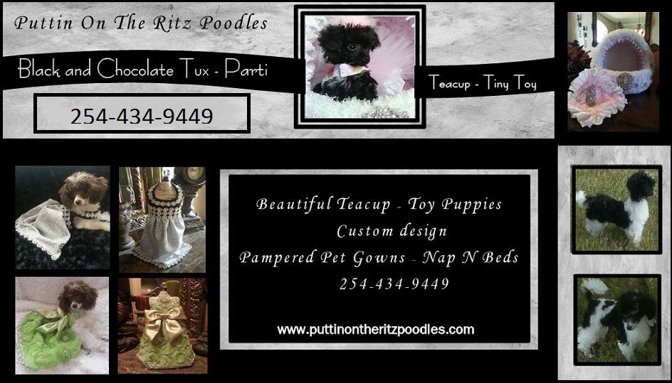 Puttin On The Ritz Poodles image 26