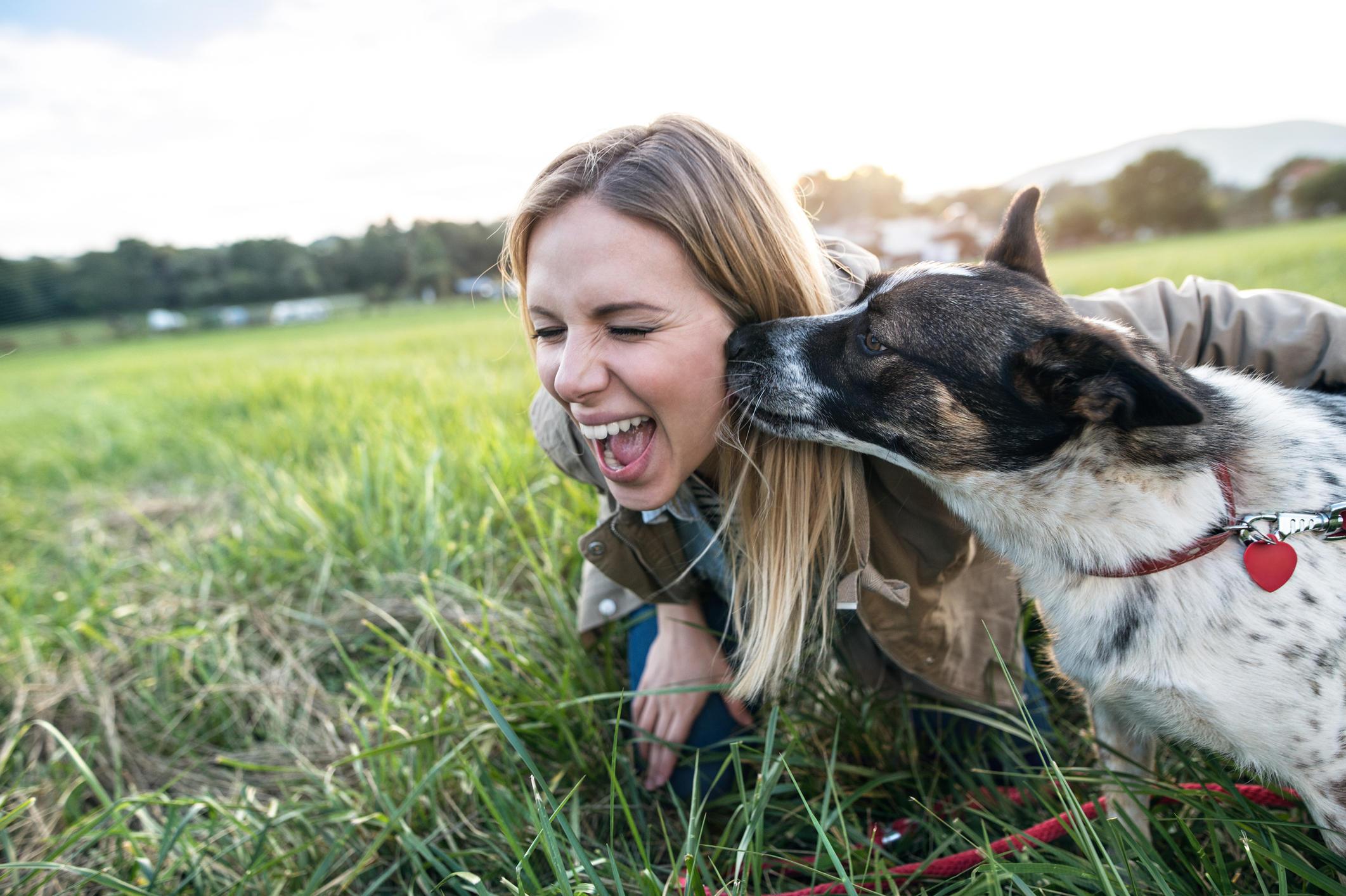 Furball Pet Care image 0