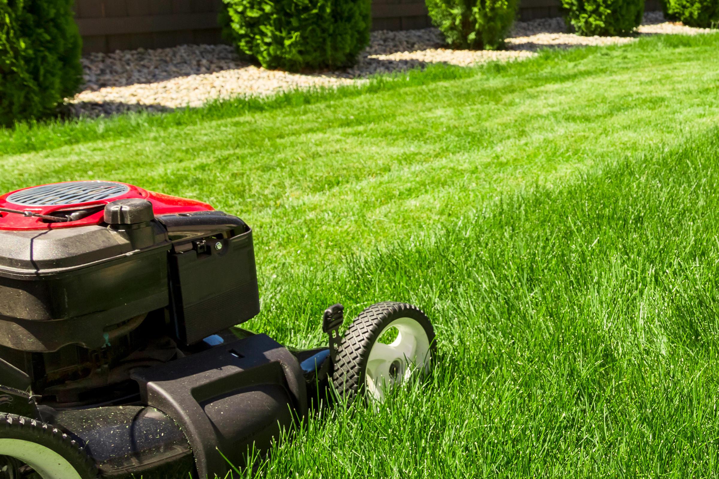 Kojack's Lawn Service image 0
