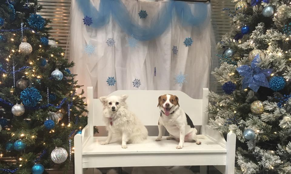 Happy Tails Pet Grooming, Boarding, & Daycare image 3