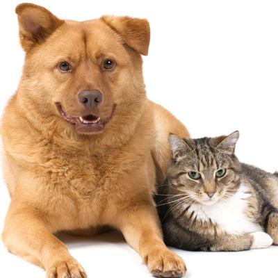 Southkent Veterinary Hospitals image 1