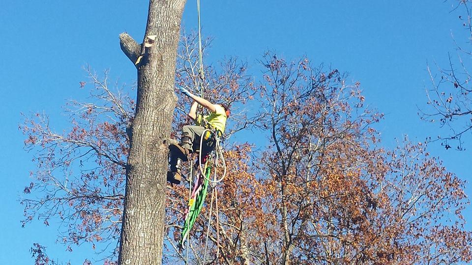 Woodswalker Tree Service image 0
