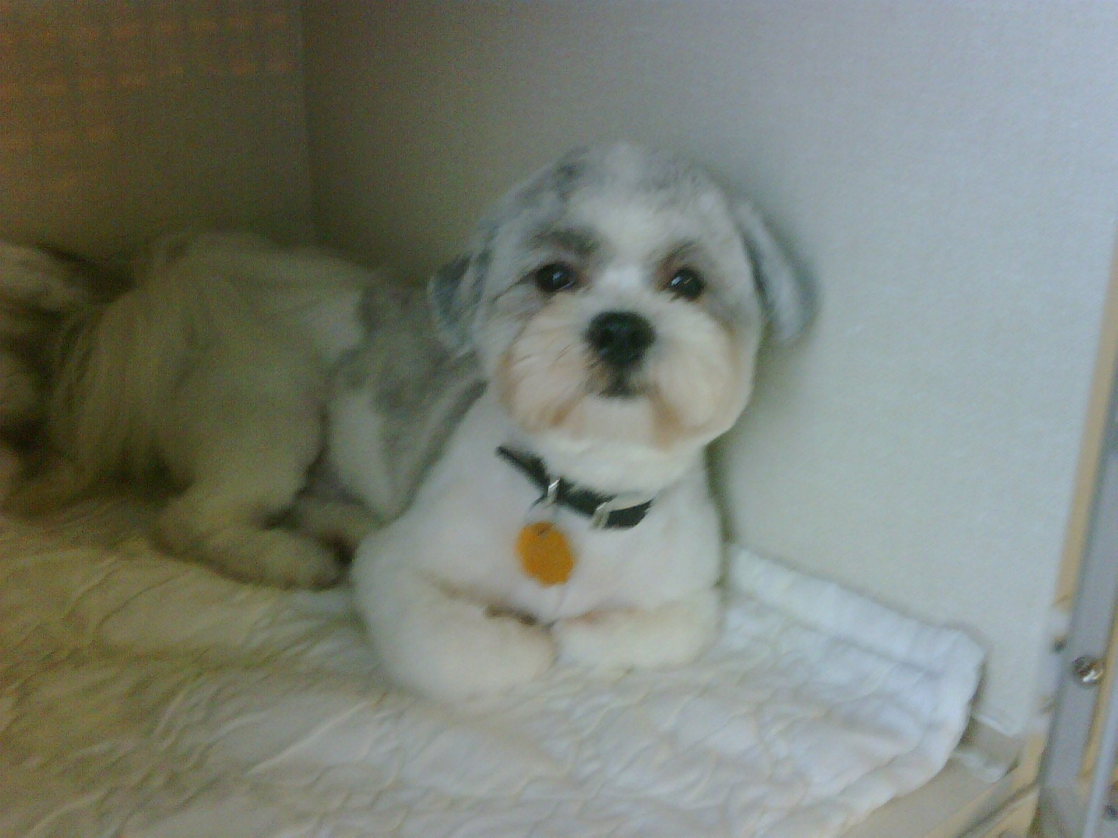 Soft Touch Dog Grooming in Orangeville: After