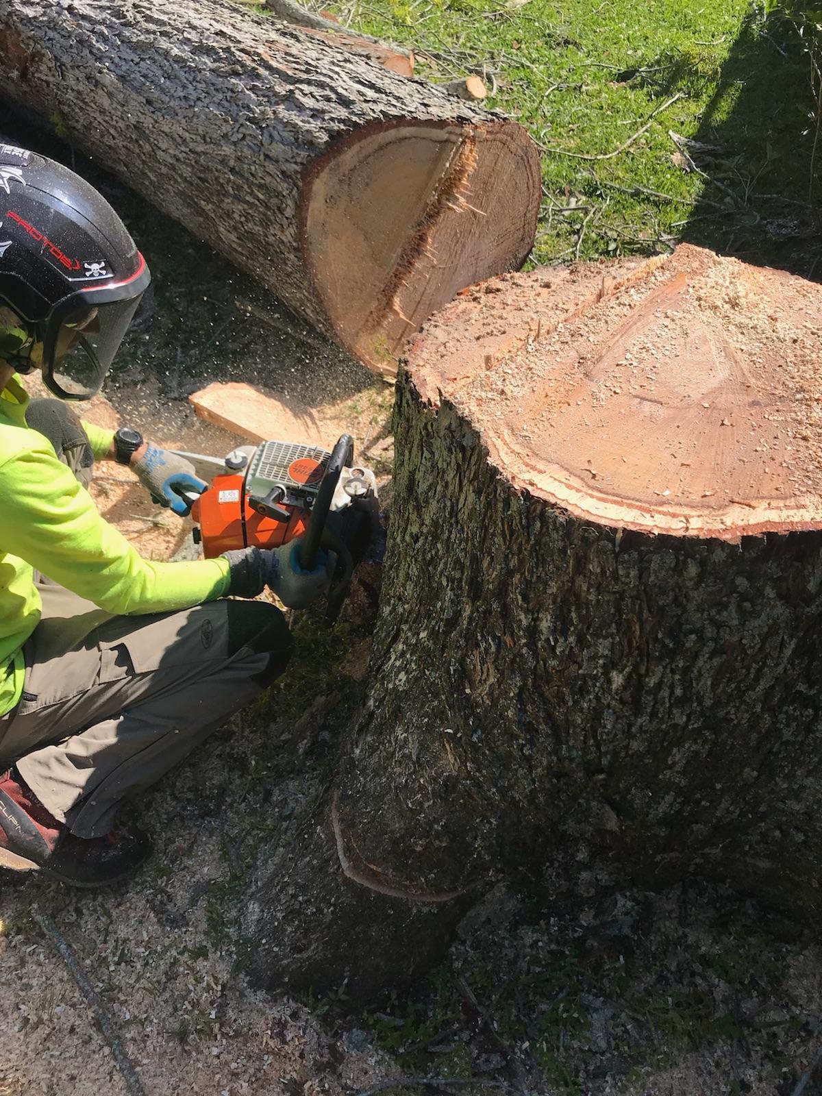 S & L Tree Service & Stump Grinding image 10