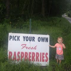 Nourse Farms image 6