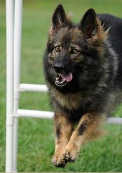 Citizen K9 Dog Training And Agility image 4