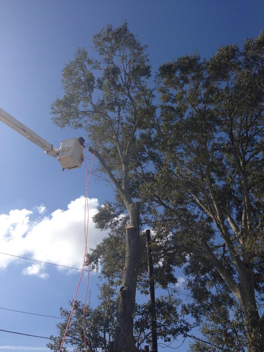 S & L Tree Service & Stump Grinding image 3