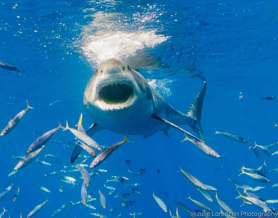San Diego Shark Diving Expeditions, Inc image 4