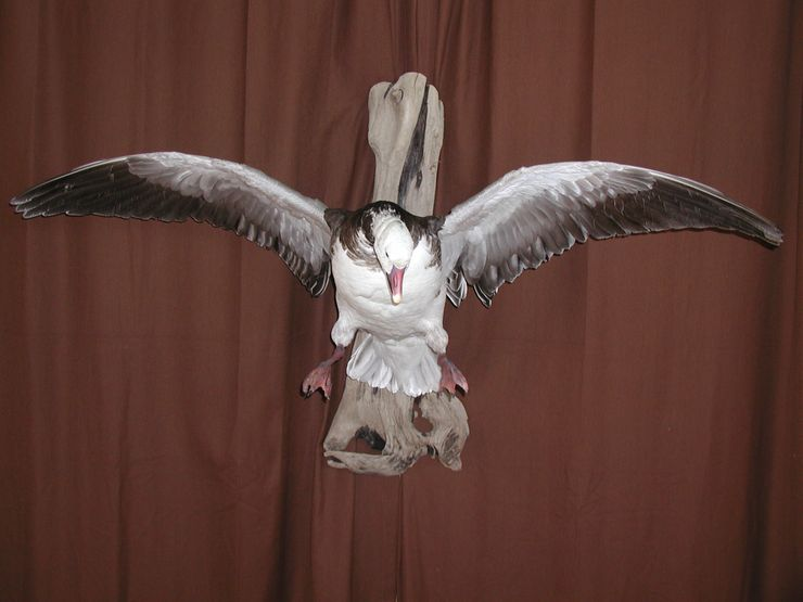 Buck's Taxidermy image 1