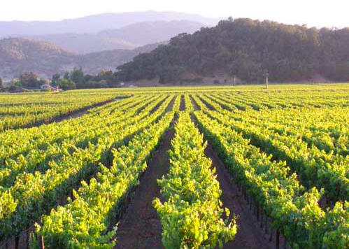 Roots Run Deep Winery image 4