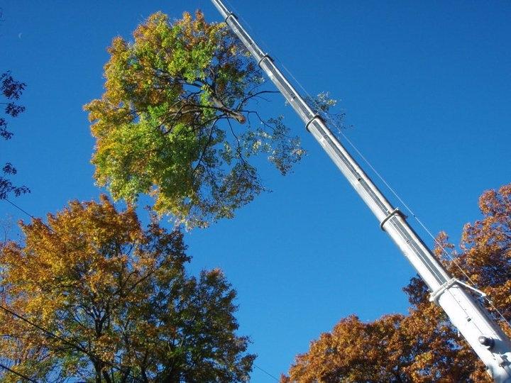 Greenleaf's Tree Service image 12