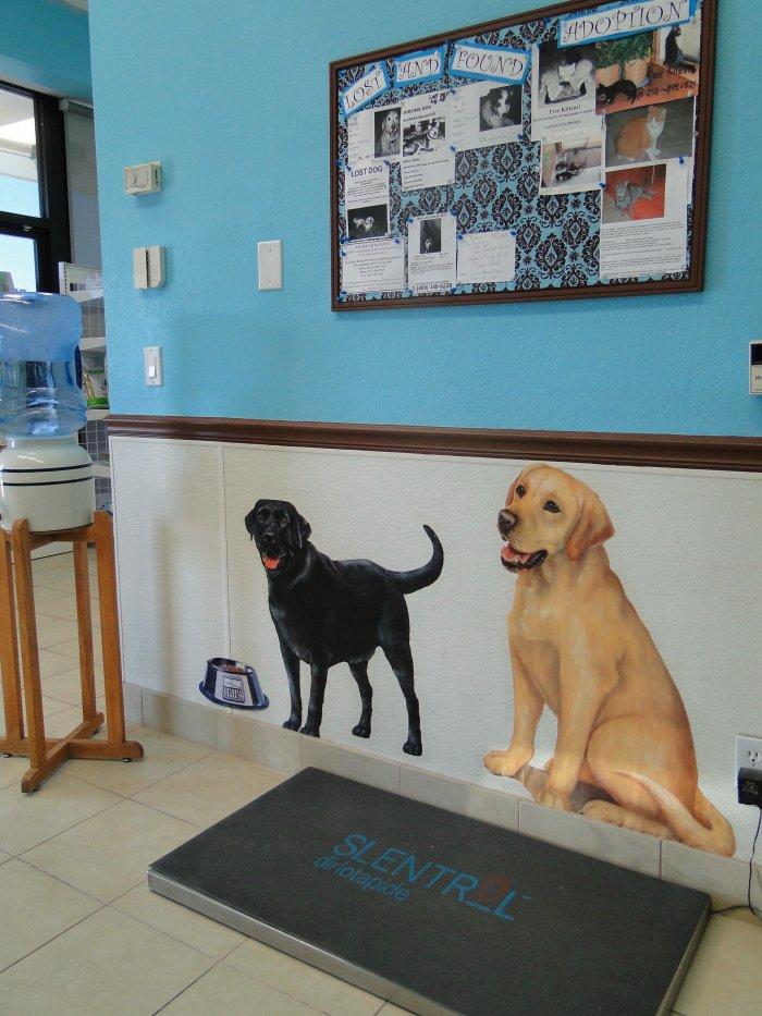 VCA Pet Doctor Animal Hospital in Richardson, TX, photo #2