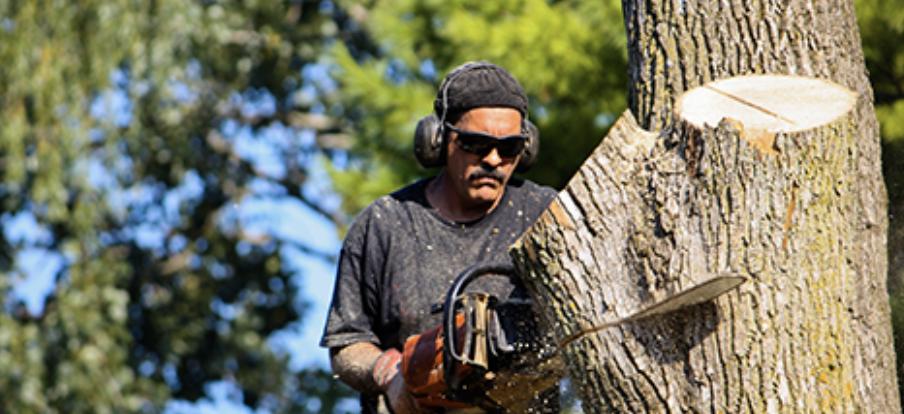 US Tree Troopers image 2