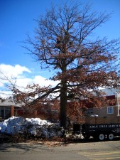 Able Tree Services image 5