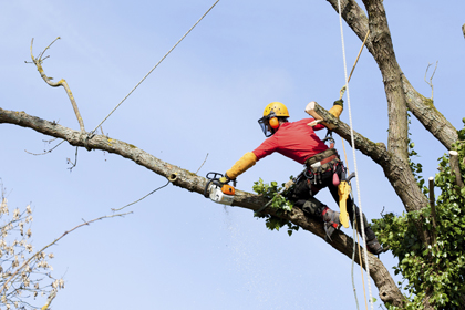 Ax Men Tree Service LLC image 1