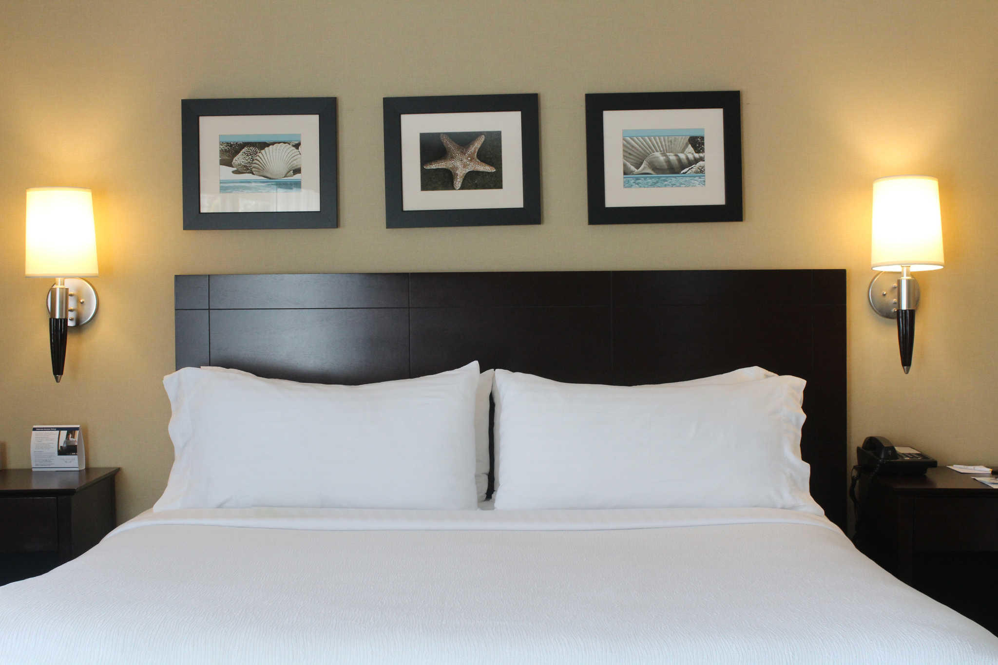 The Volare, an Ascend Hotel Collection Member image 8