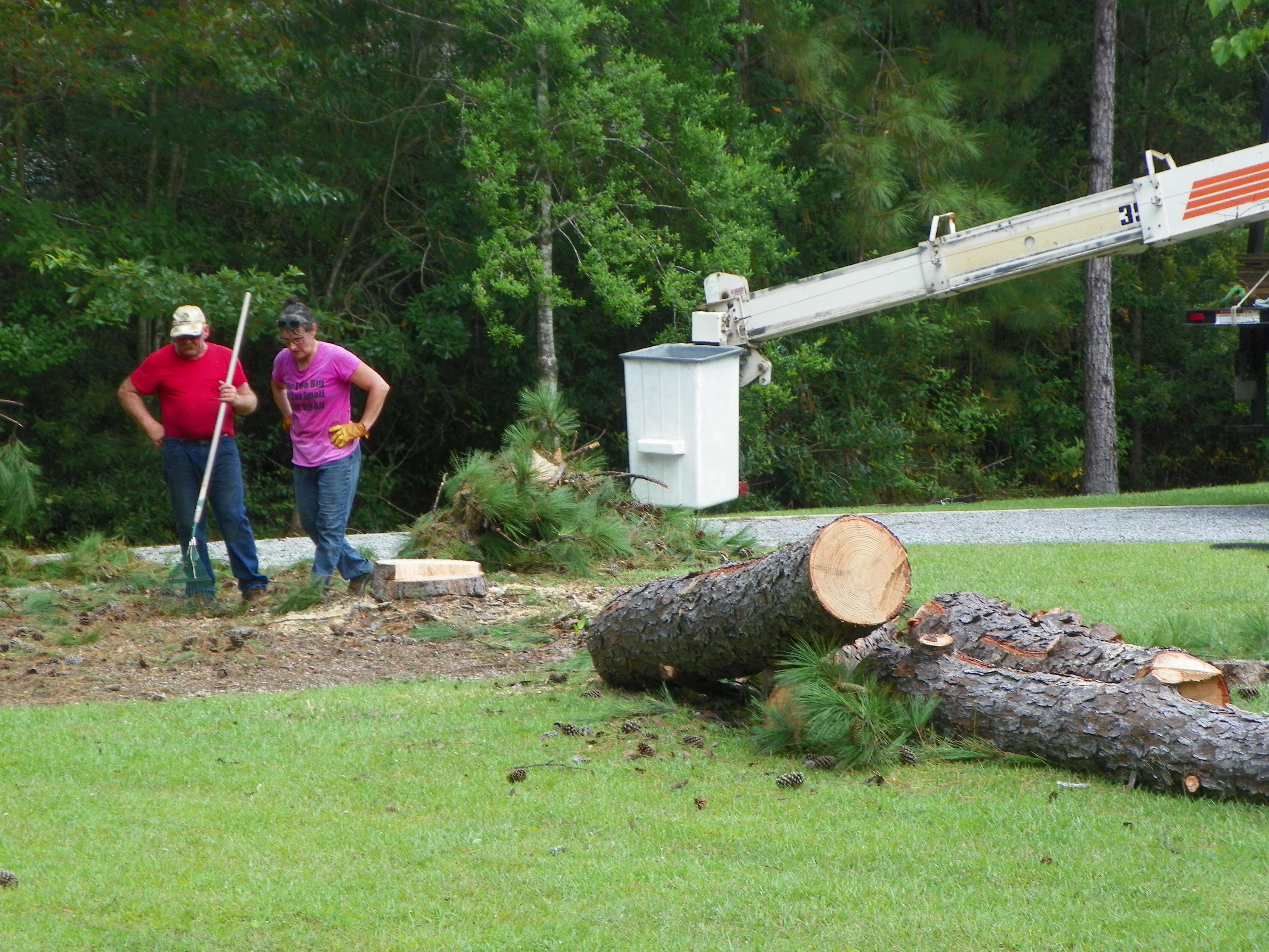 Barry McCraney Tree Service image 2