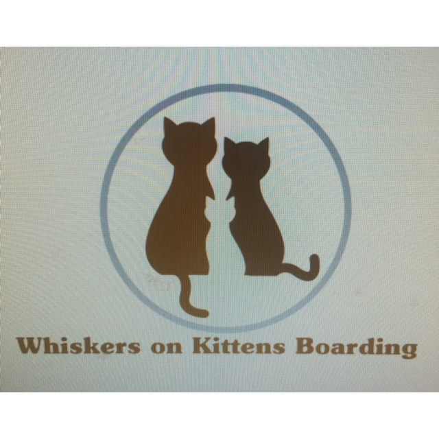 Whiskers on Kittens Boarding image 15