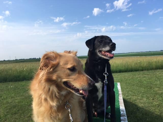 Ledges Farm Dog Camp image 8