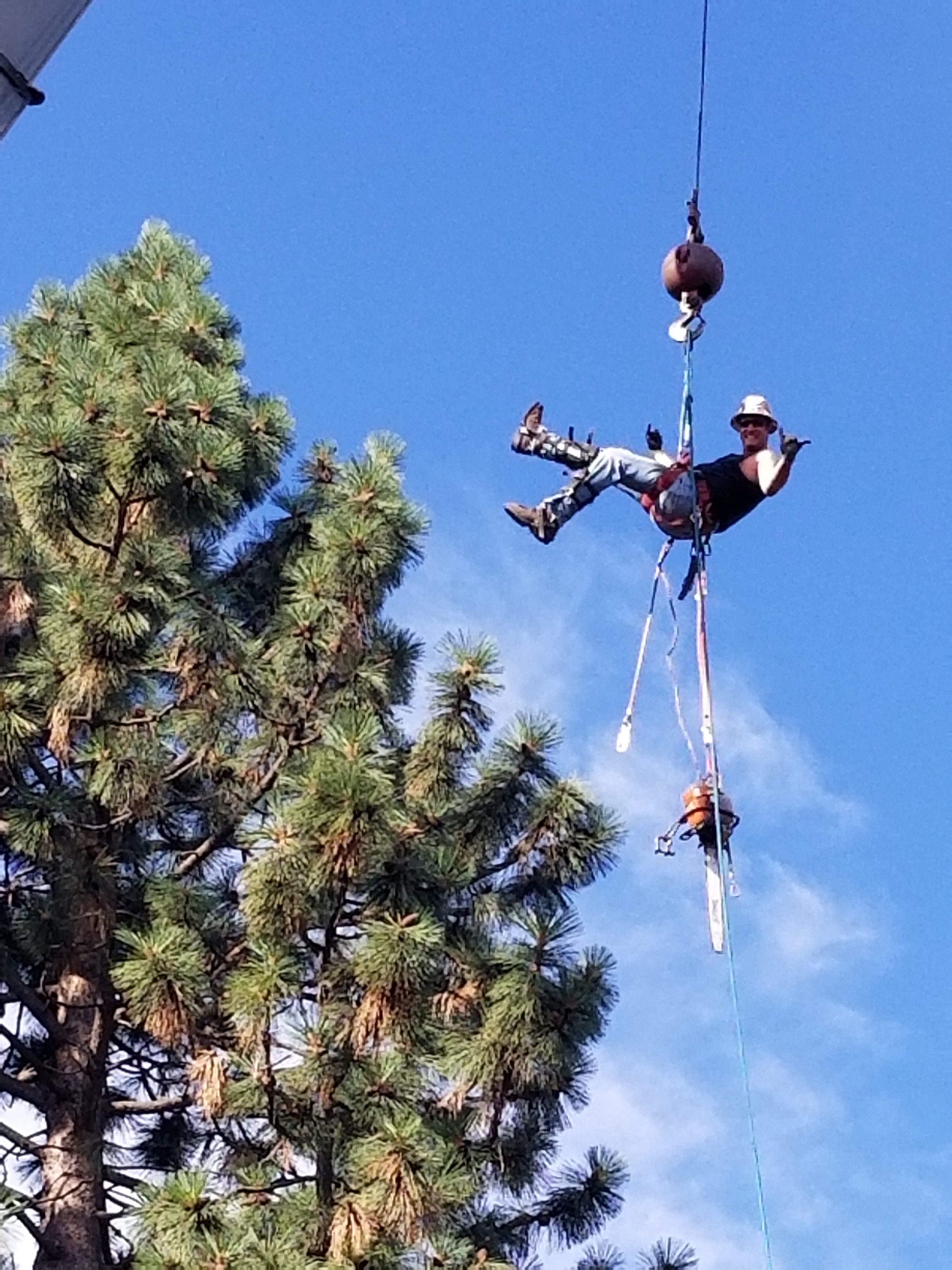 Central Oregon Tree Experts image 1