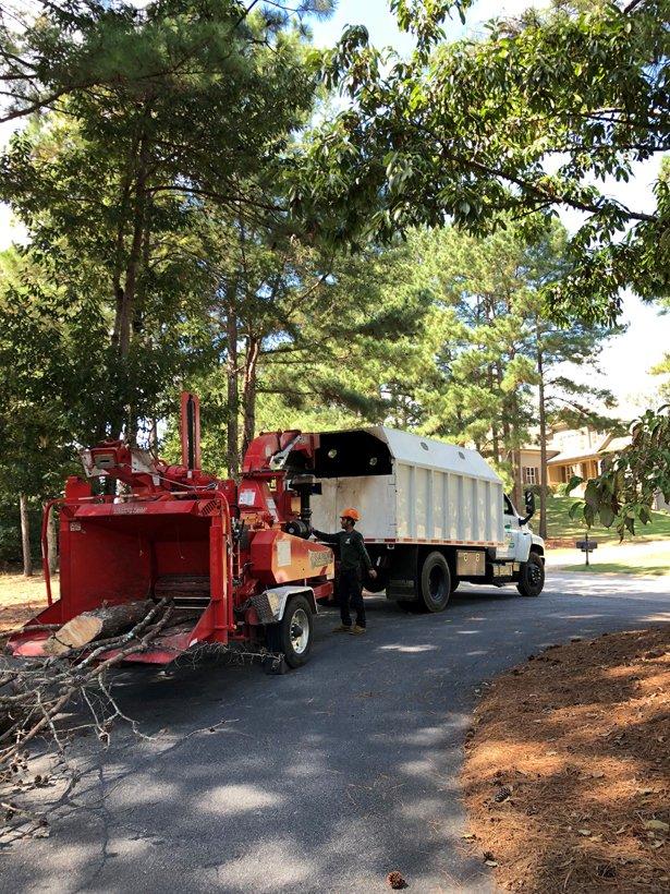 #1 Tree Service of Georgia LLC. image 1