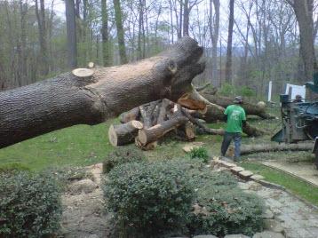 Adirondack Tree Specialists Inc image 4