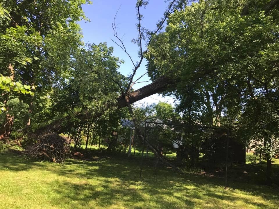 Vail Tree Service