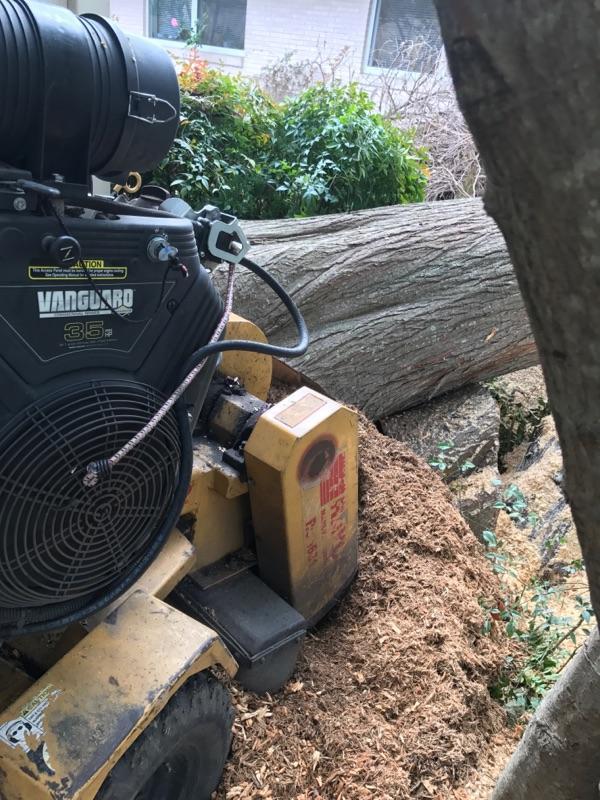 S & L Tree Service & Stump Grinding image 9