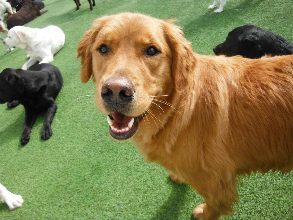 Jagger's Doggie Daycare, Dog Grooming, Training & Boarding image 17