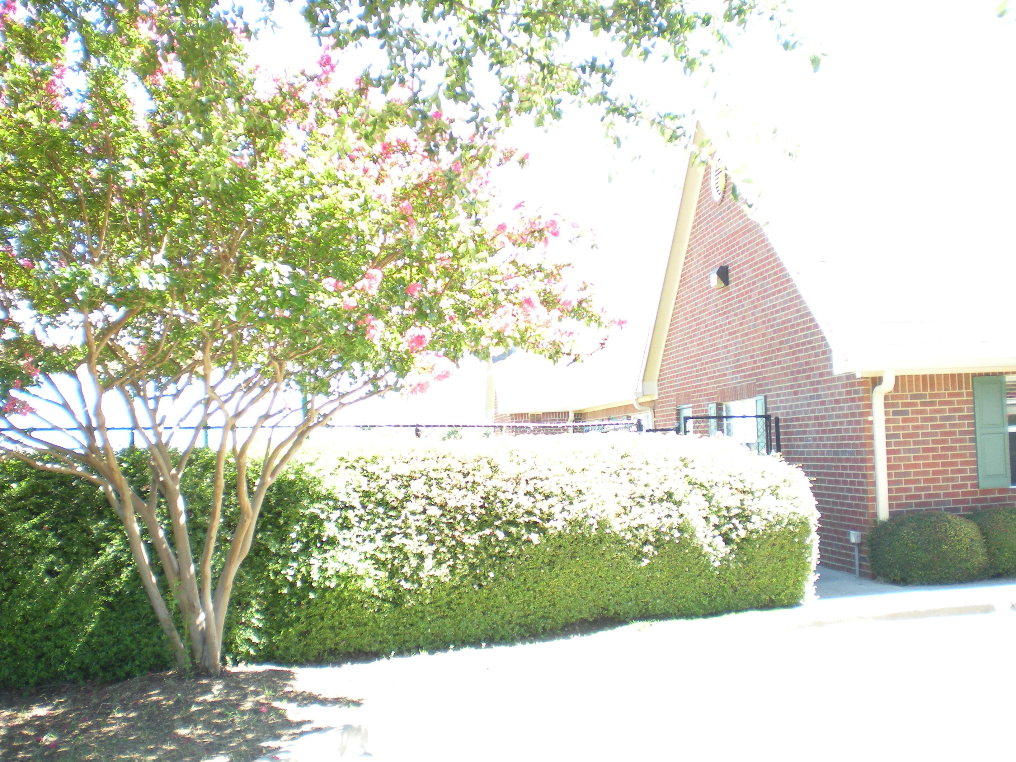 Primrose School of Rockwall image 2