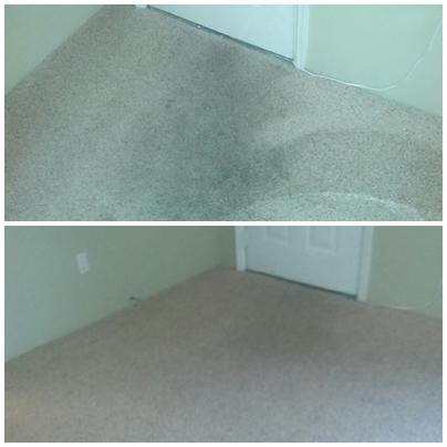 Pristine Carpet Cleaning image 16