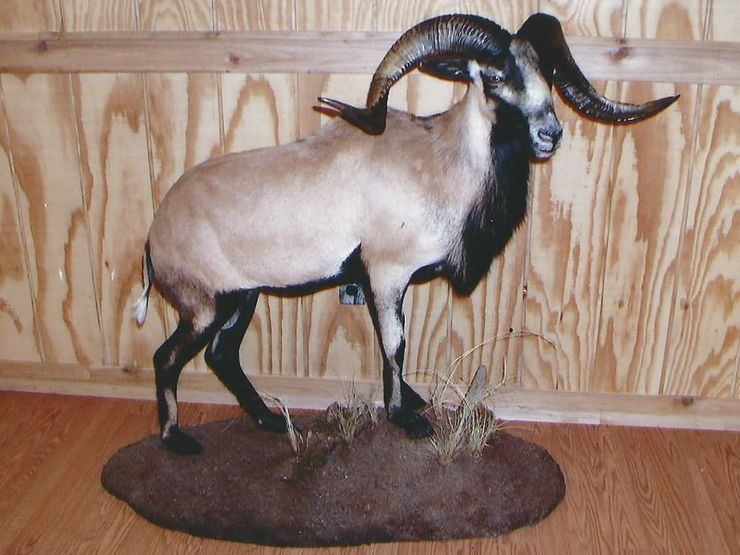 Buck's Taxidermy image 4
