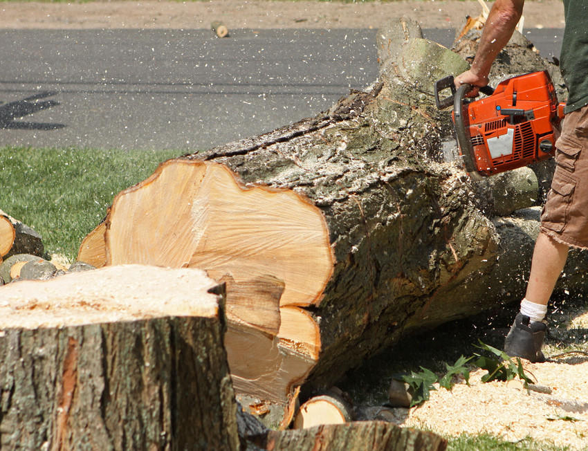 Affordable Tree Service image 7