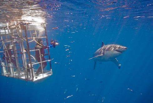 San Diego Shark Diving Expeditions, Inc image 2