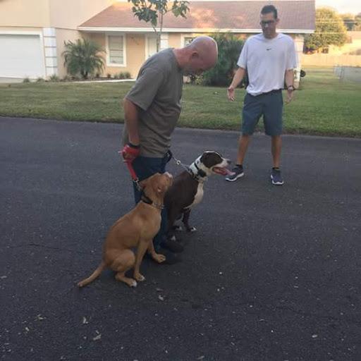 The Dog Man - Pro Dog Training image 14