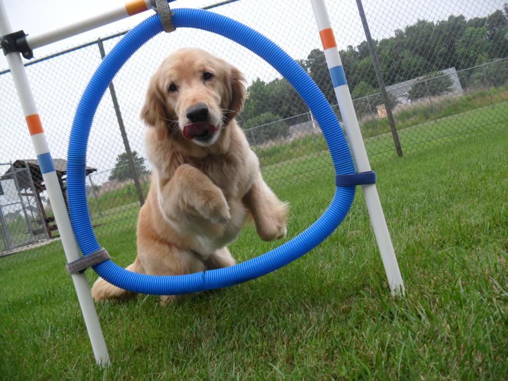 Dog Boarding Hampton Roads
