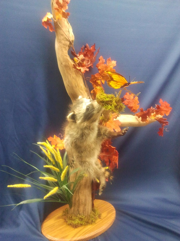 American Taxidermy Inc. image 0
